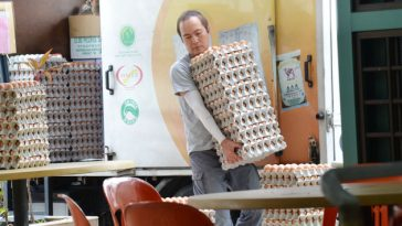 369e82_2-jimmy-egg-delivery-service-business