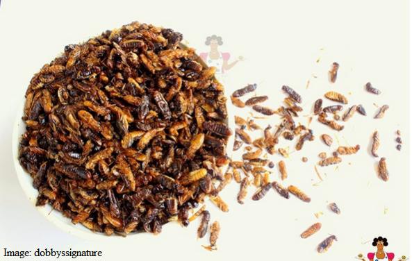 winged-termites-food