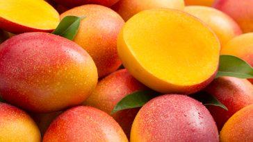Mango-650x365