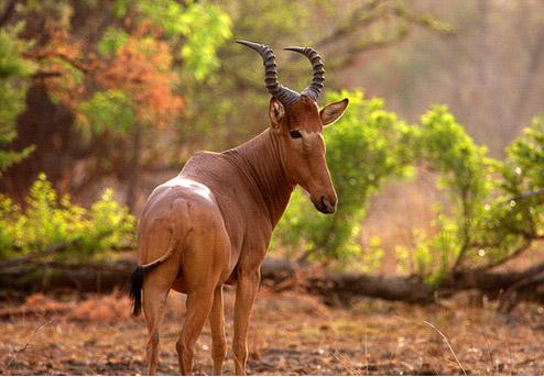 Wildlife-at-Kamuku-National-Park
