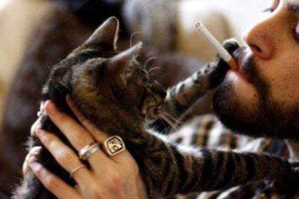 315224_53317128cat and smoke