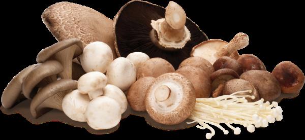 mushroom-group