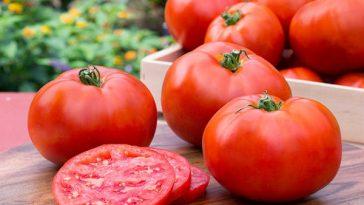 tomatoes-505e