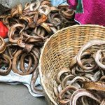 Snake Market