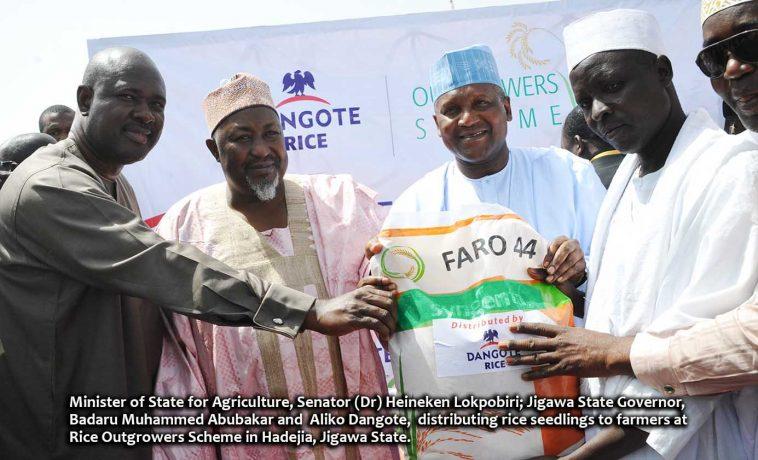 Dangote Rice Outgrowers Scheme (1)