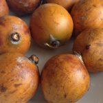 Nigerian cherry