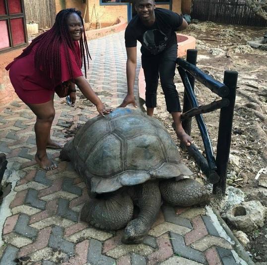 worlds-oldest-tortoise