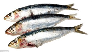 oily-fish-1