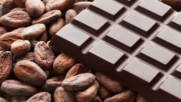 Cocoa Beans Farming Has Prospect-Cocoa Farming Team