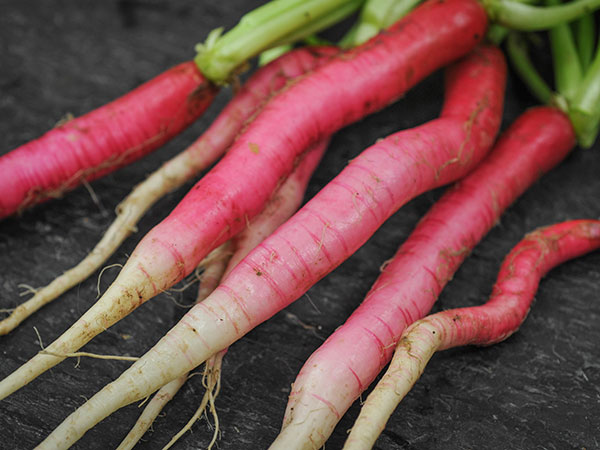 radish, health benefits of radish