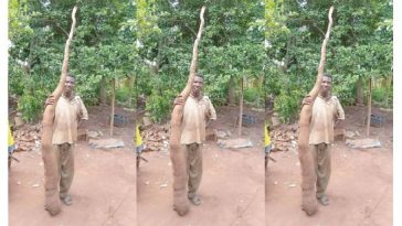 World's Largest Cassava Tuber